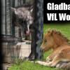 Matchday: Gladbach gegen Wolfsburg