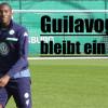 VfL Wolfsburg: Josuha Guilavogui bleibt ein Wolf
