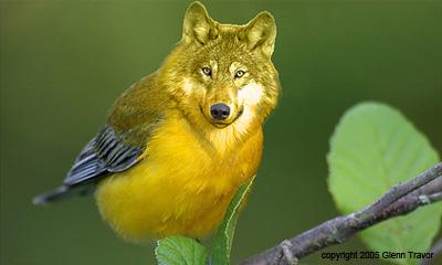 VogelWolf