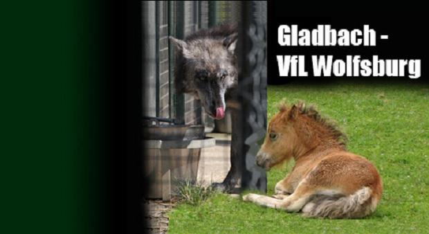gladbach-wolfsburg